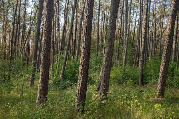 昼間の日光の下で草や高い木に覆われた森