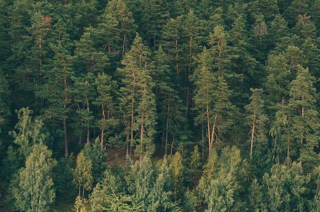 Лес, покрытый зеленью под солнечным светом на мадейре, португалия