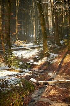 冬の日光の下で雪に覆われた森