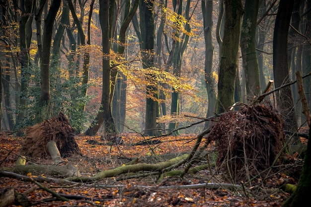 Осенний лес, покрытый деревьями и кустами, под солнечным светом