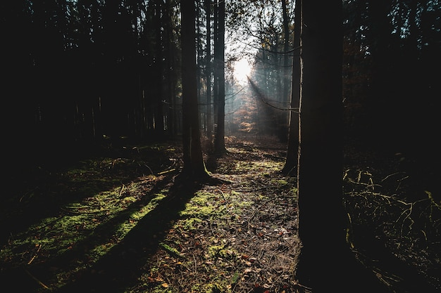 秋の日差しの下で木々や乾燥した葉に覆われた森