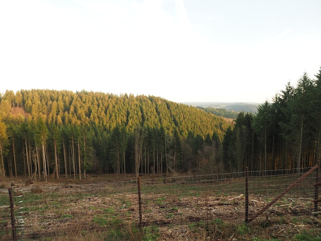 낮에 햇빛 아래 나무에 덮여 숲