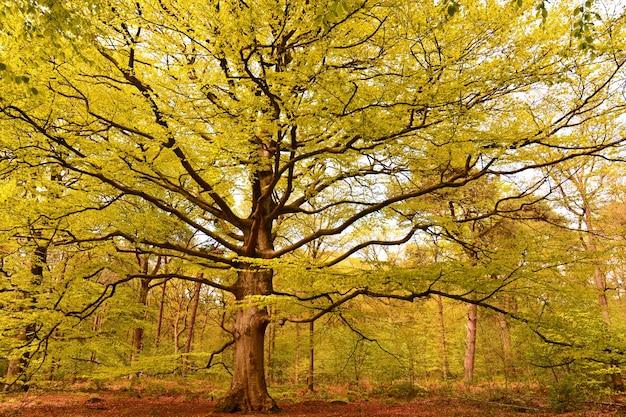 Лес, покрытый деревьями с разноцветными листьями под солнечным светом осенью