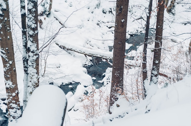 Forest covered in trees and snow at daytime in winter