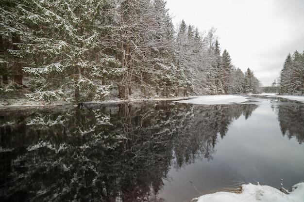 겨울 숲에서 숲 크릭