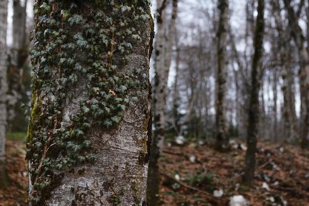 日光の下でキャプチャされた森の詳細