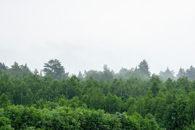 霧と曇りの雨天時の森。