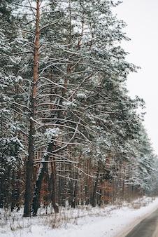 絵のように美しい道のある冬の森