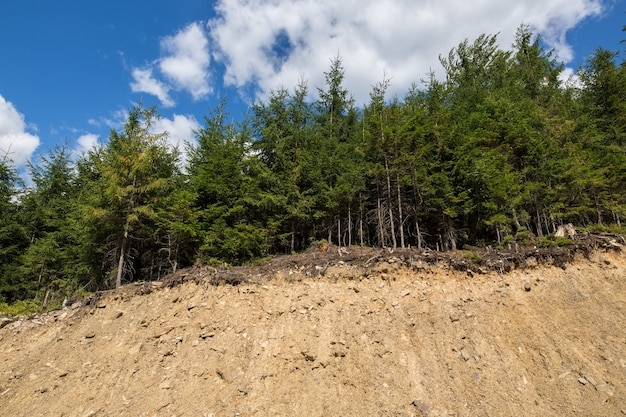 Forest on the edge of the collapsed hill