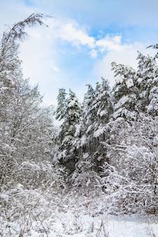 冬の森の端。雪の中の木のてっぺん。晴れた日の風景。雪に覆われた
