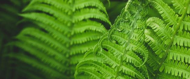 Лесной папоротник в солнечном свете после дождя.