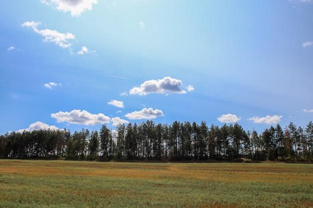 雲と青空を背景に森のフィールド