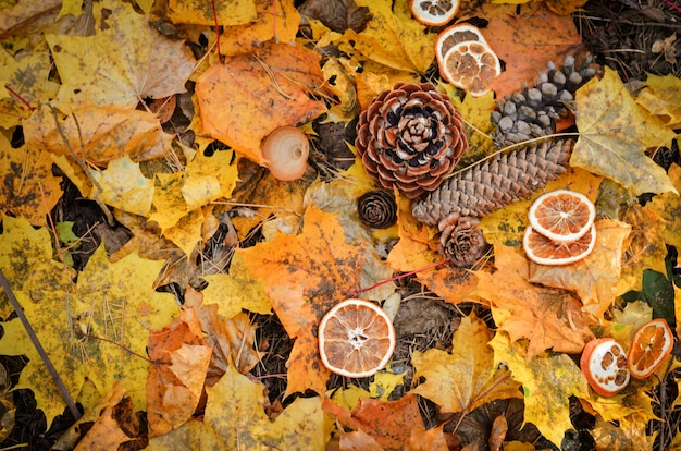 Forest fir cones on a background of yellow leaves