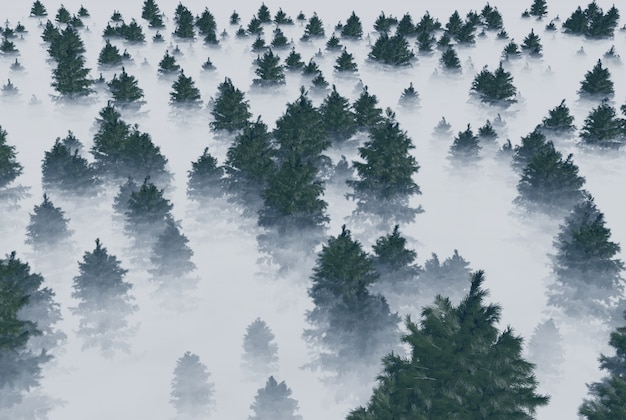 A forest of fir trees in the fog. 3d rendering.