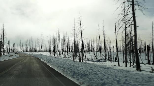 산불 여파, 미국에서 탄 탄 나무. 화재 후 검은 마른 불에 그을린 침엽수림. 브라이스 캐년의 마른 나무가 손상되었습니다. 자연 재해와 생태 재앙입니다.