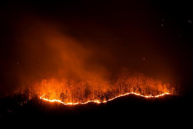 Лесной пожар горящие деревья ночью.