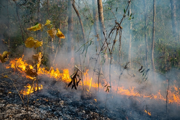 Forest fire disaster is burning caused by human