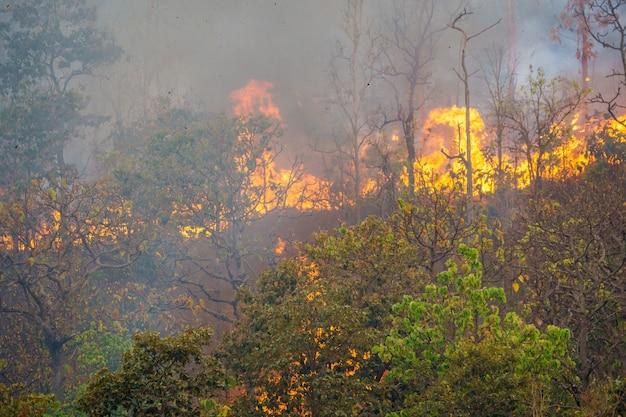 Лесной пожар горит в основном как поверхностный пожар, распространяющийся по земле.