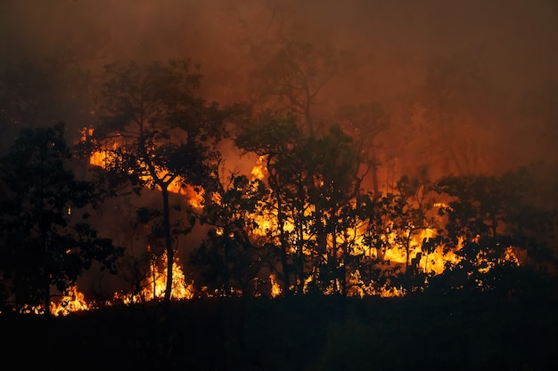Forest fire is burning primarily as a surface fire, spreading along the ground