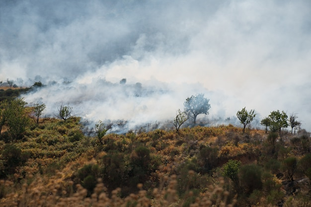 Forest fire in the mountains