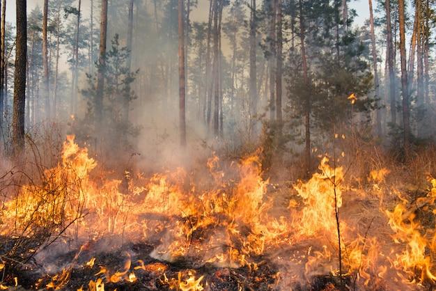 Forest fire in progress