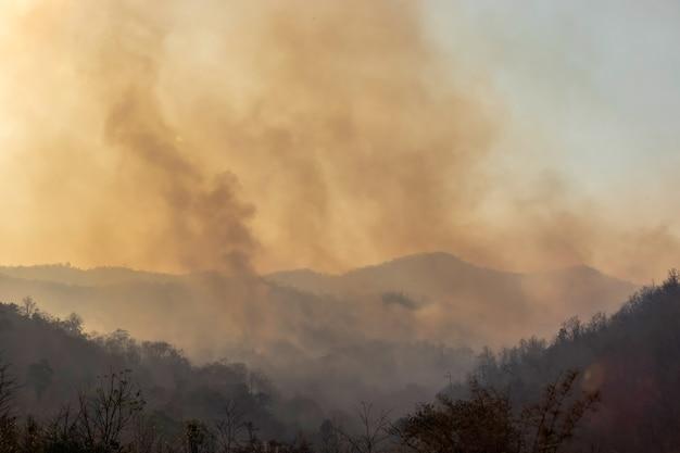 Дым от лесных пожаров на севере таиланда.