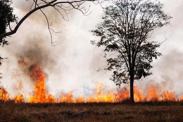 Лесные пожары жгут лес весной