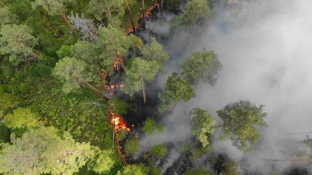 森林火災は激しく燃えています。