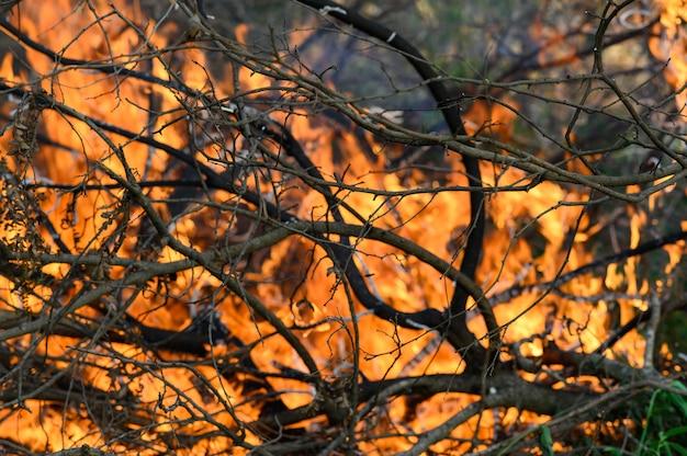 Лесные пожары вызваны жаркими, сухими условиями. кондоры вызывают загрязнение воздуха.
