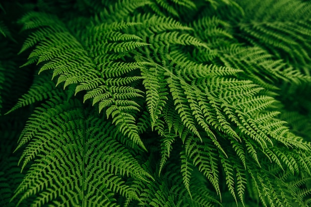 숲 식물 녹색 고비 잎 배경