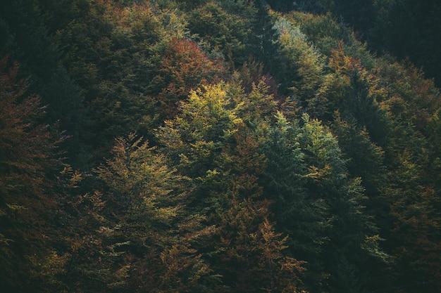 Листва леса осенью