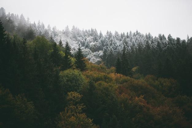 Листва леса осенью Premium Фотографии