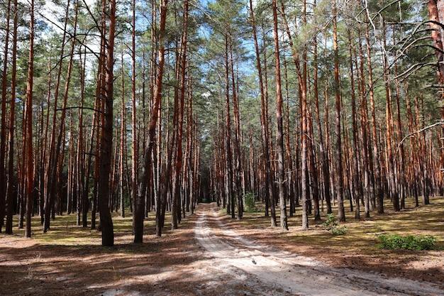 松の木の成長を背景に道路のある森の空き地