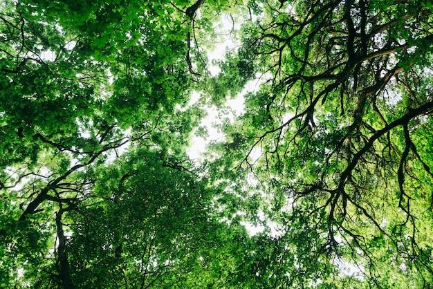 숲, 녹색 나뭇가지, 푸른 하늘, 위쪽 전망, 아름다운 자연 배경
