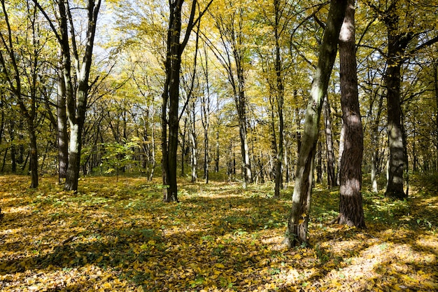 初秋から中秋にかけての太陽光線に照らされた、一年の秋の時期に丘陵地帯に生える森。