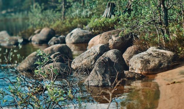 Лес, растущий на каменном берегу озера, путешествие по россии. республика карелия