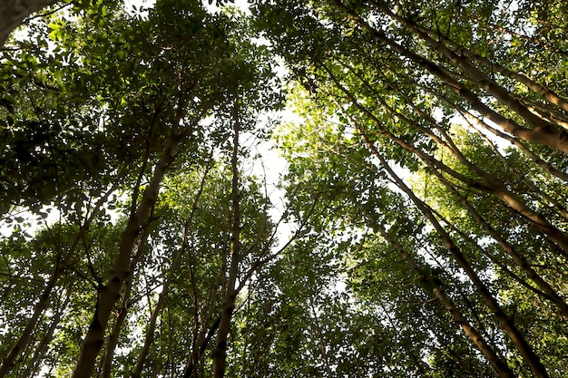Forest growth increasing in countries with a higher quality of life