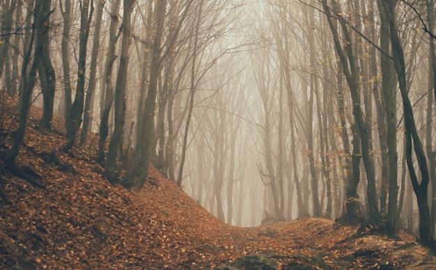 Лес в тумане с туманом. сказочный жуткий лес в туманный день. холодное туманное утро в лесу ужасов с деревьями