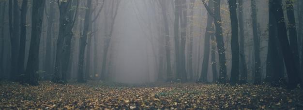 Лес в тумане с туманом. сказочный жуткий лес в туманный день. холодное туманное утро в лесу ужасов