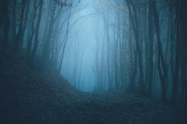 霧の霧の森。