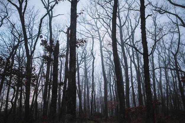안개 속의 숲. 늦은 가을에 남부 독일의 어둡고 안개가 자욱한 숲. 배경, 그림 개념입니다.