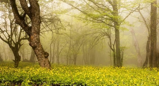 霧の中の森