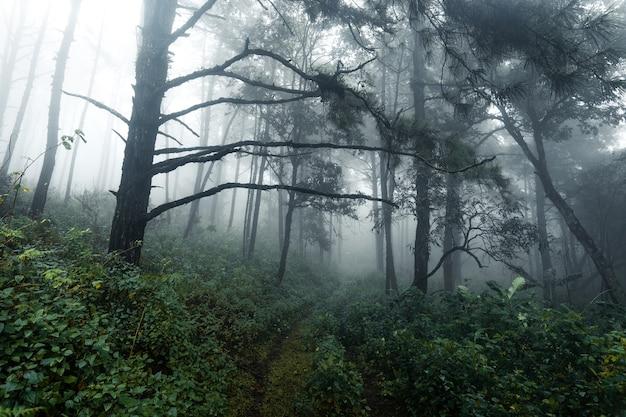 霧雨の日の森、シダや木々