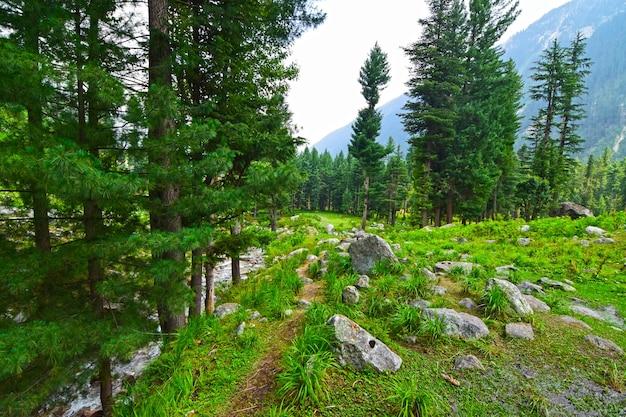 Forest in kumrat valley pakistan
