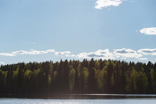 春または初夏に若い葉を持つ白樺の森の湖とトウヒの森。