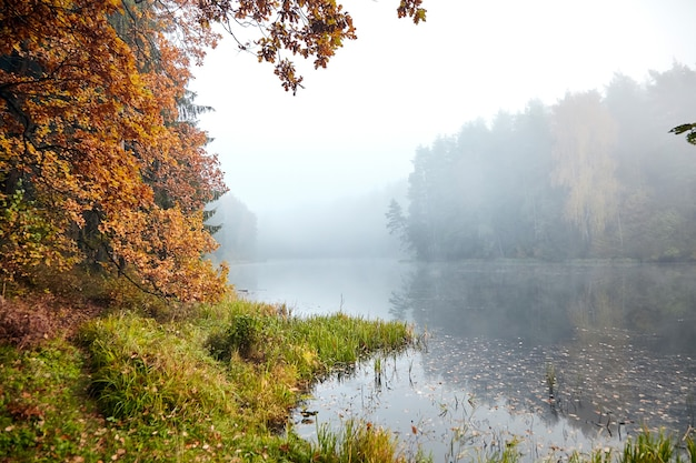 Лесное озеро, осенний пейзаж, дубовые ветви с пожелтевшей листвой, природа в октябрьское туманное утро