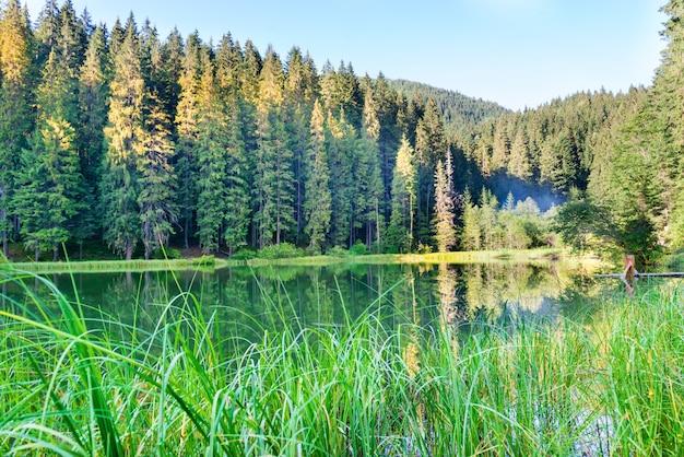 Лесное озеро в горах с голубой водой и утренним светом