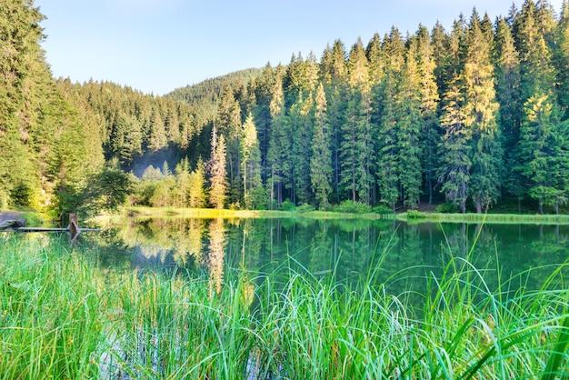 푸른 물과 아침 햇살이 있는 산속의 숲 호수