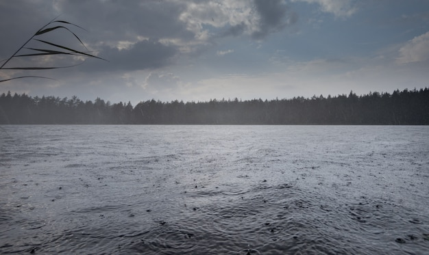 Forest lake in the rain