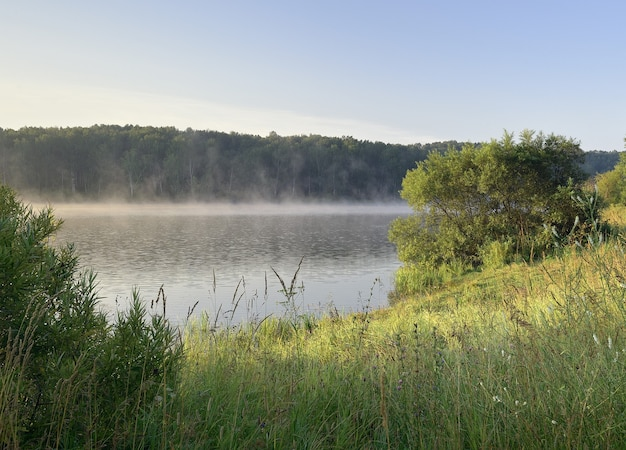 Forest lake shore in the morning